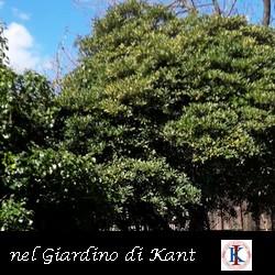 Il Giardino di Kant