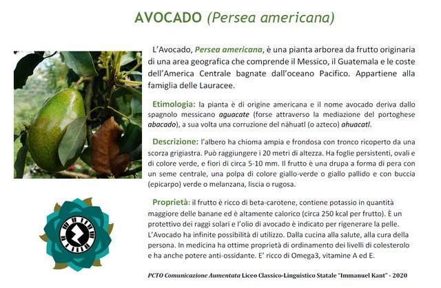 Palina-avocado-inevidenza