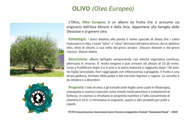 palina-olivo-inevidenza